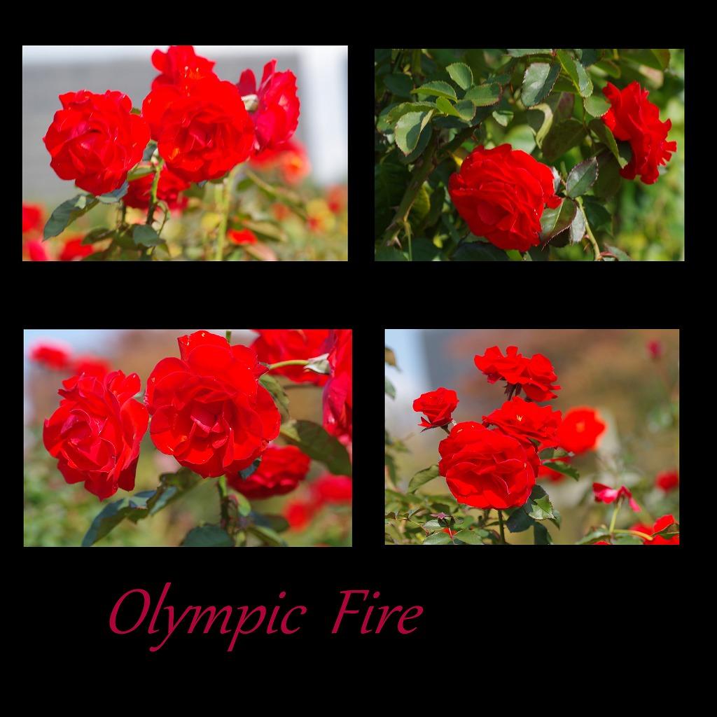 秋薔薇 毎日更新_d0147812_1822071.jpg