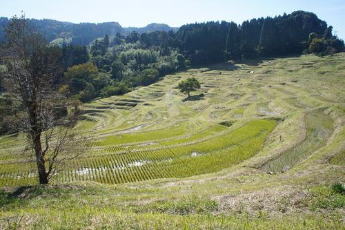 【秋の鴨川(千葉県)散歩】_f0215714_15235962.jpg