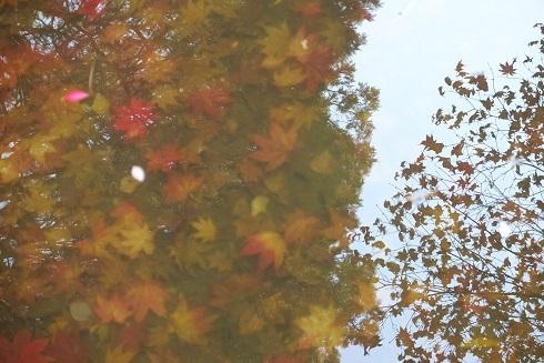 晩秋の札幌中島公園を散歩しました。_f0362073_06560577.jpg