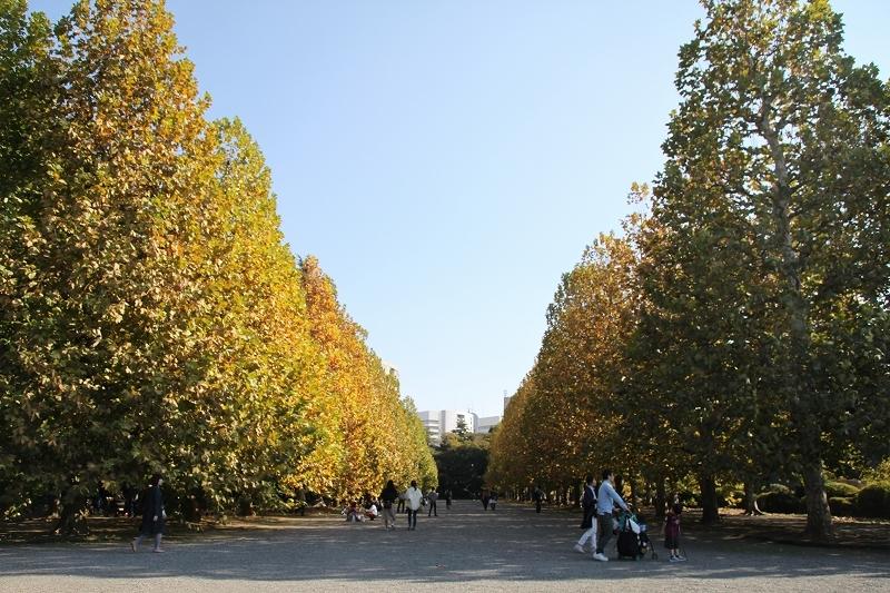 新宿御苑 黄色の木々_f0374092_17374911.jpg