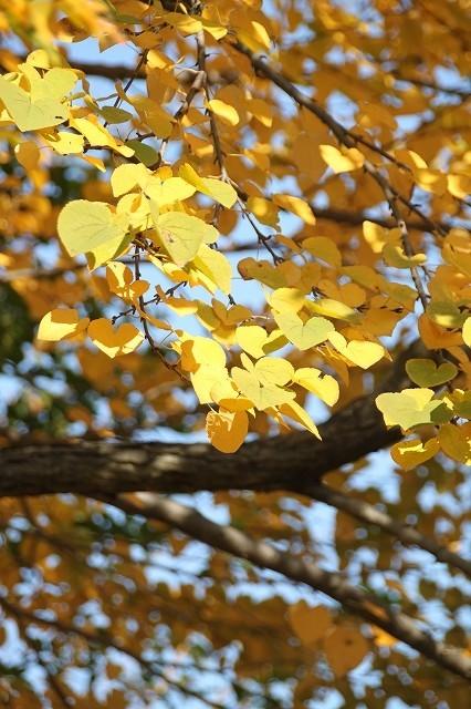 新宿御苑 黄色の木々_f0374092_17453116.jpg