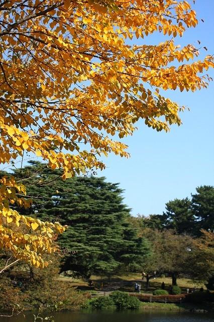 新宿御苑 黄色の木々_f0374092_17522481.jpg