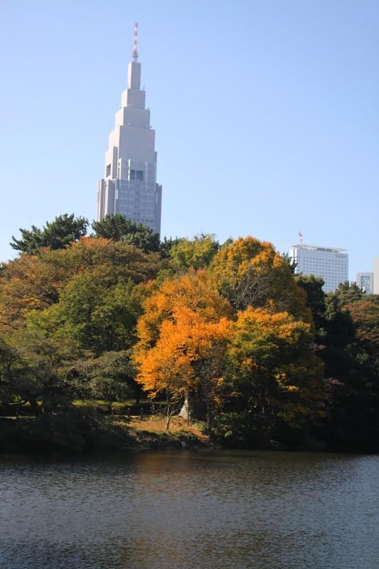 新宿御苑 黄色の木々_f0374092_17525088.jpg