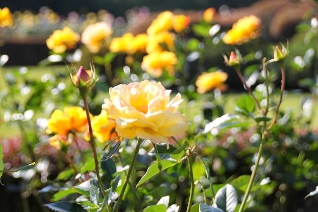 新宿御苑 黄色の木々_f0374092_18025978.jpg