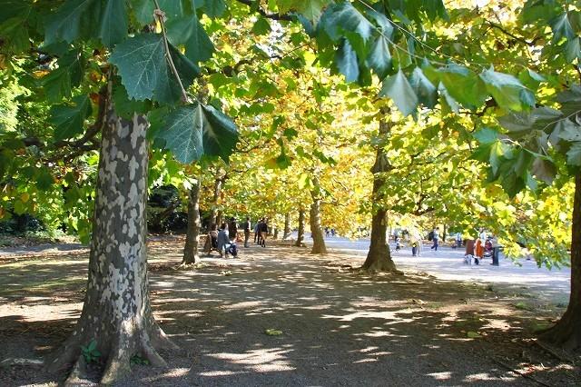 新宿御苑 黄色の木々_f0374092_18042988.jpg