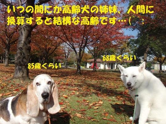 f0121712_05471450.jpg