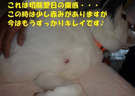 f0121712_07293192.jpg