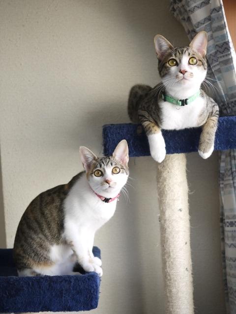 猫のお留守番 しかまるくんぽんずちゃん編。_a0143140_22523431.jpg