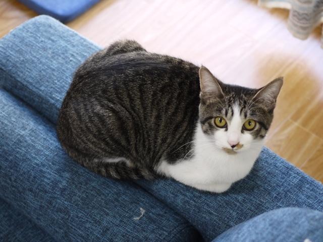 猫のお留守番 みりんちゃん編。_a0143140_22592978.jpg