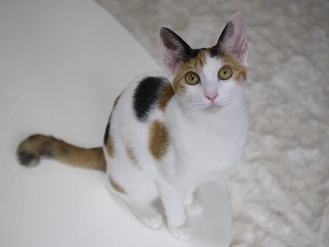 猫のお留守番 りんごちゃん編。_a0143140_23014785.jpg