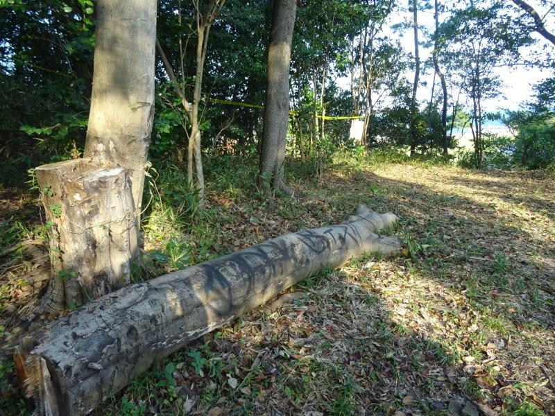 竹取り & 植林・・・うみべの森 _c0108460_19523620.jpg