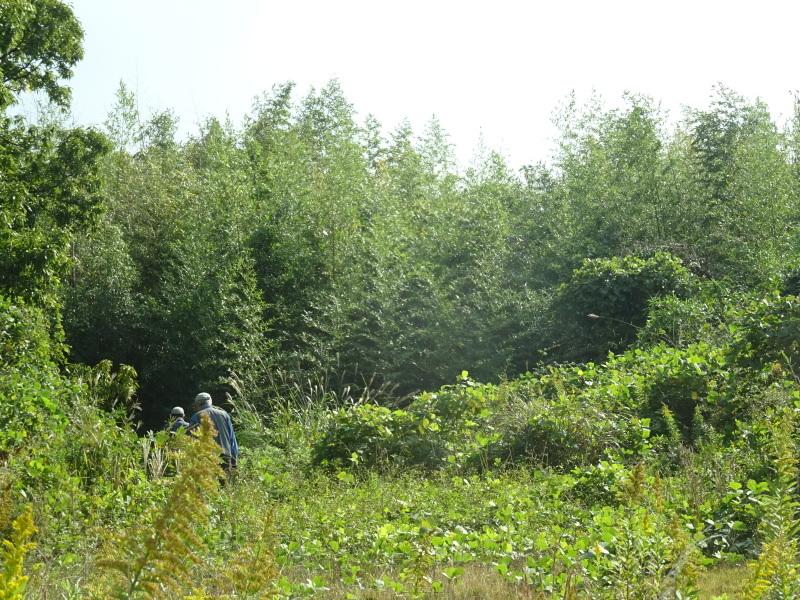 竹取り & 植林・・・うみべの森 _c0108460_19544963.jpg
