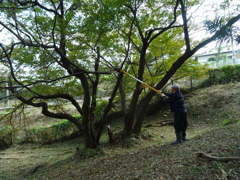 竹取り & 植林・・・うみべの森 _c0108460_20021008.jpg