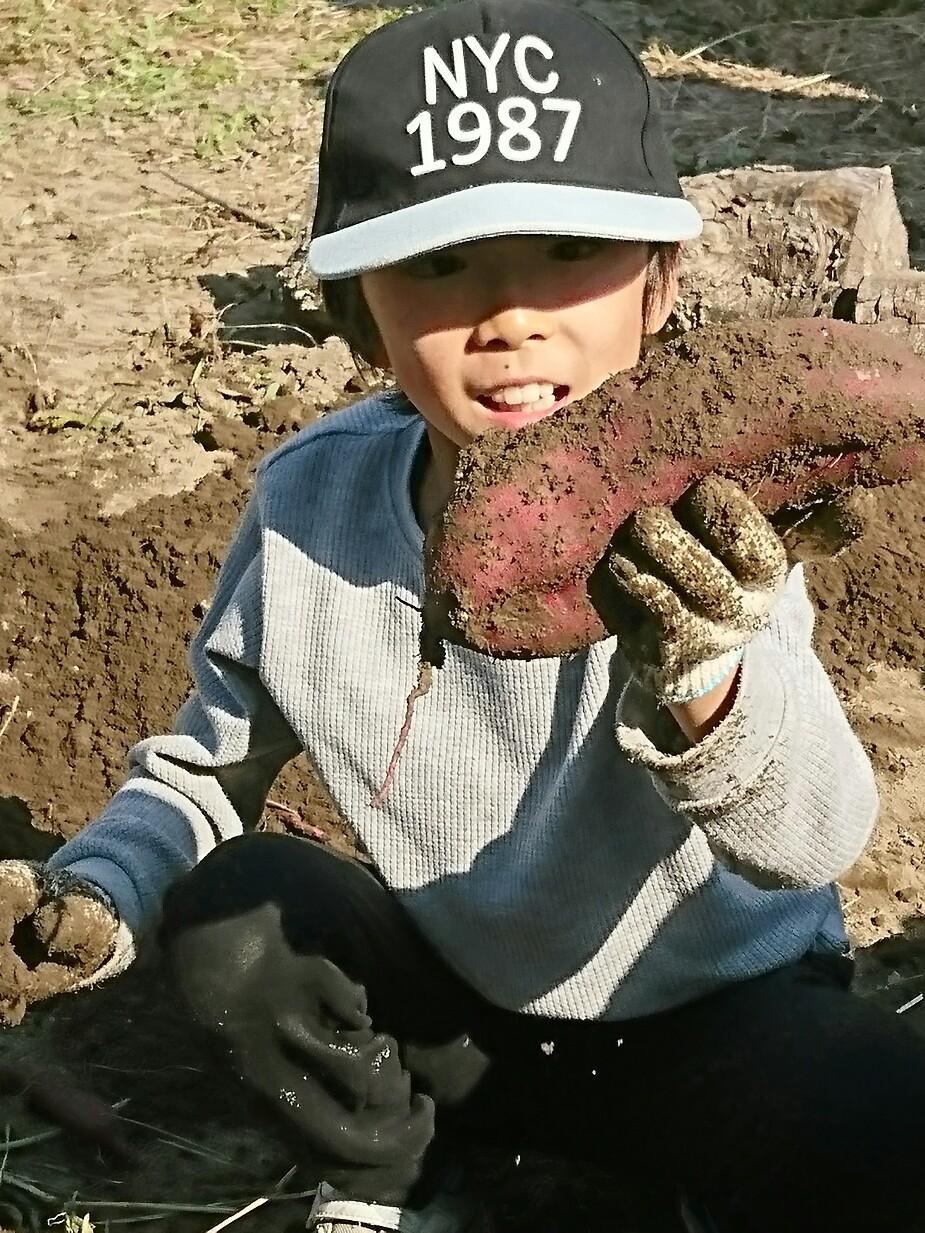 芋掘り_a0272765_15392471.jpg