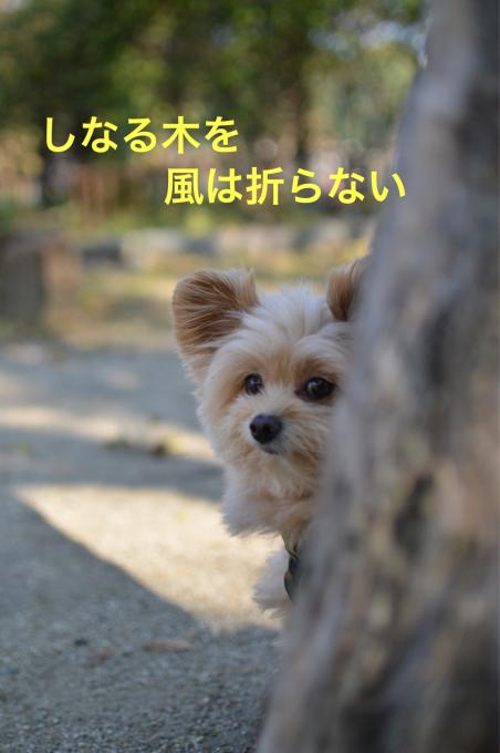 a0059277_10085329.jpg