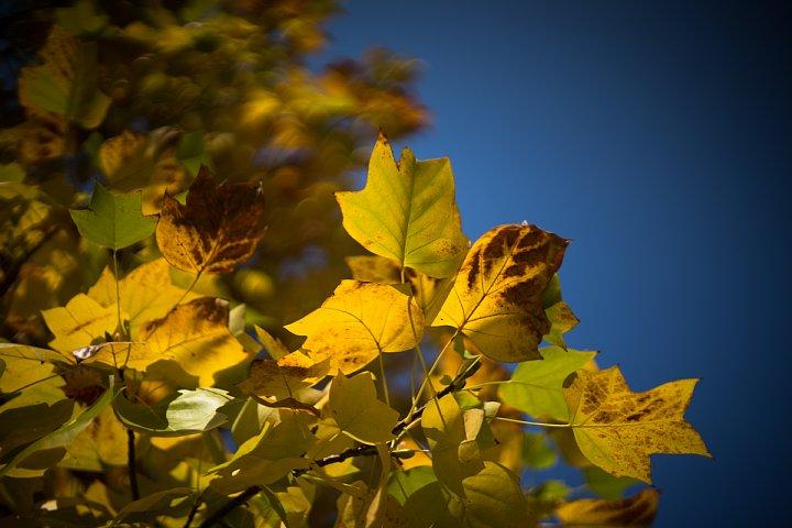秋色に包まれた赤煉瓦の森_d0353489_19192262.jpg