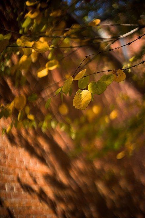 秋色に包まれた赤煉瓦の森_d0353489_19205789.jpg