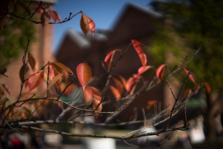 秋色に包まれた赤煉瓦の森_d0353489_19214746.jpg