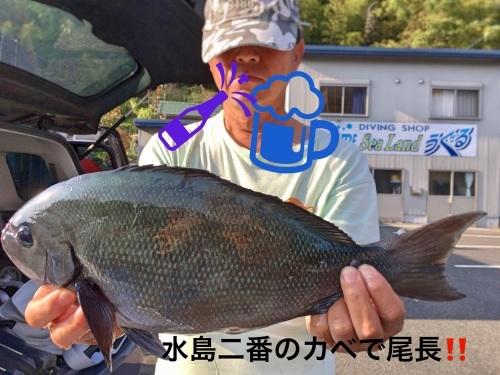 11月9日水島二番カベで尾長W(`0`)W_d0114397_22145477.jpeg