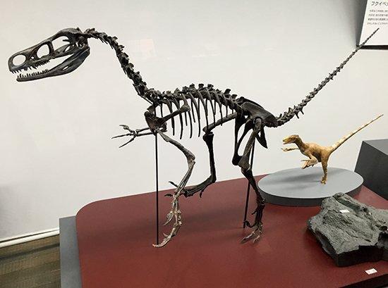福井県立恐竜博物館にて『きょうりゅうオーディション』複製原画展&イベントいよいよ!_d0135608_12574615.jpg