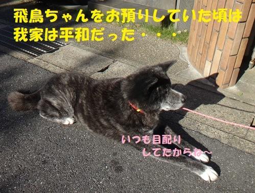 f0121712_09201404.jpg