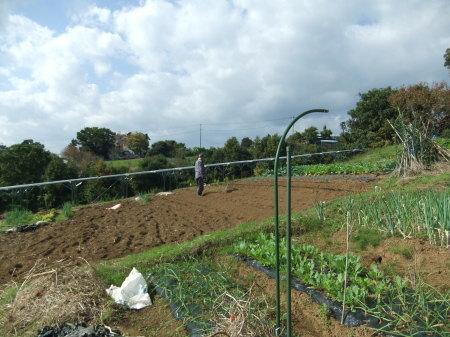 えんどう豆の種まき..._b0137932_16211725.jpg