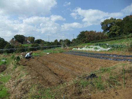えんどう豆の種まき..._b0137932_16215714.jpg