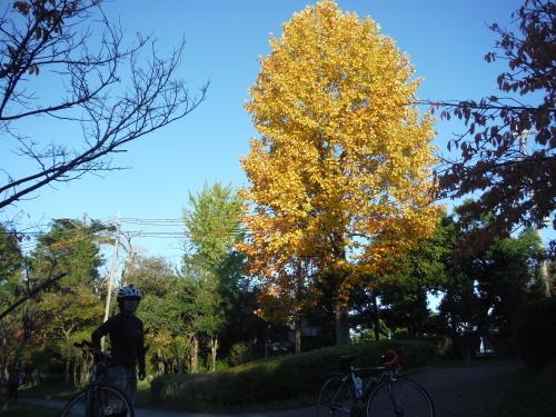 急に朝サイクリングします!_b0332867_21173357.jpg