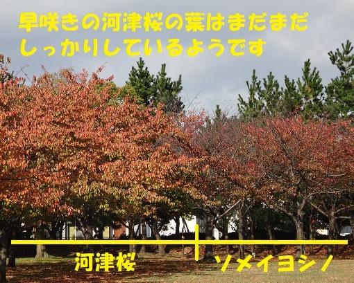 f0121712_14163893.jpg