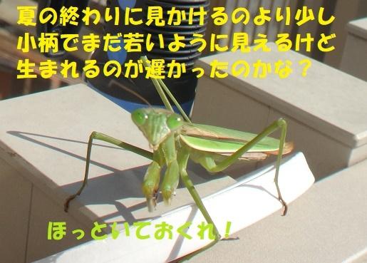 f0121712_14413244.jpg