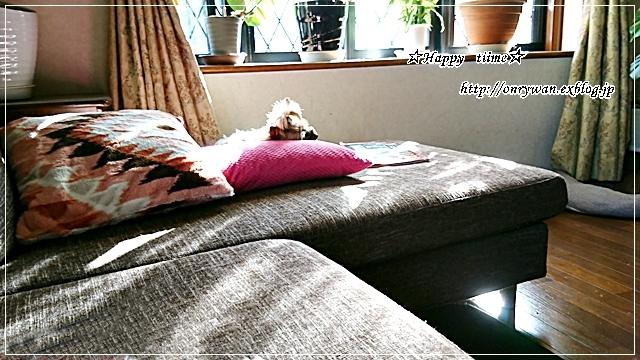 豚の生姜焼き弁当と今日のわんこ(陽だまり編)♪_f0348032_17473962.jpg