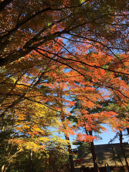 六甲の紅葉2017年11月10日_a0048975_19135079.jpg