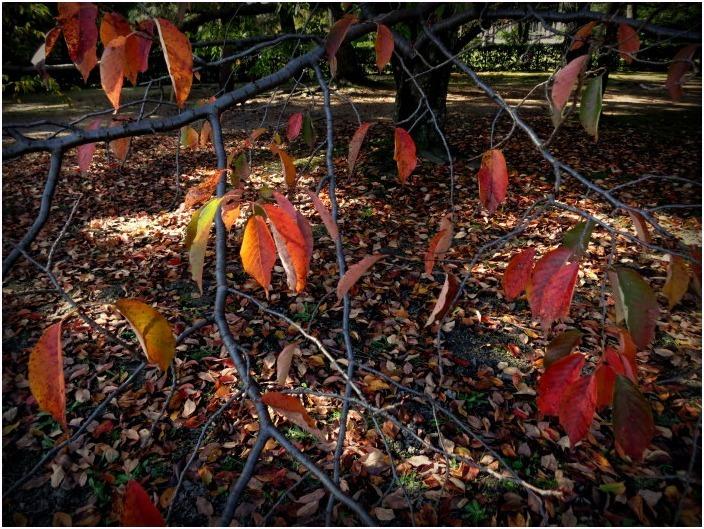 < 秋を求めて ① >_c0036080_18190249.jpg