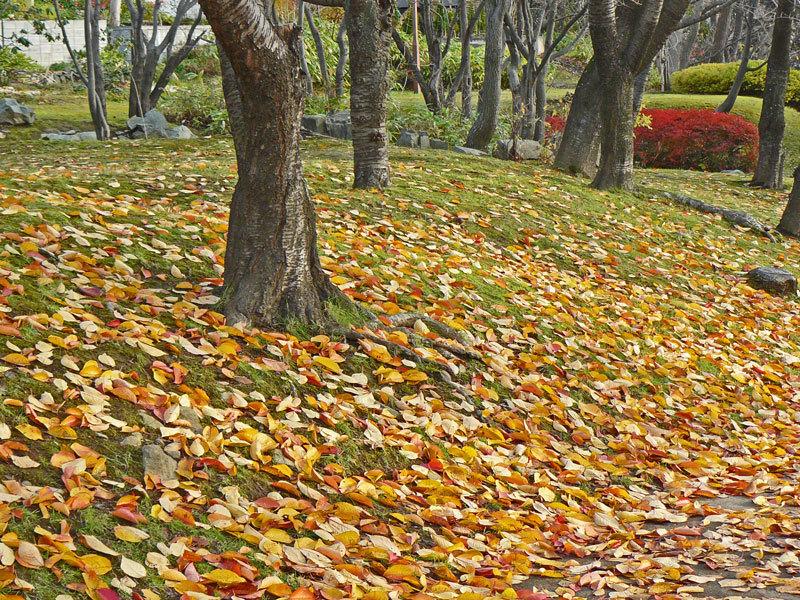 緑道公園の落葉_d0162994_07530012.jpg