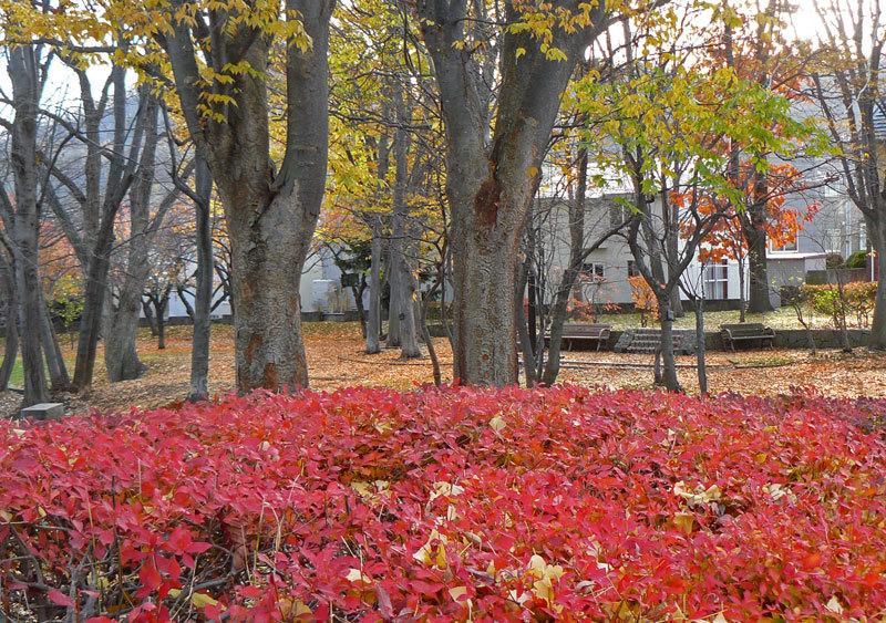 緑道公園の落葉_d0162994_07531687.jpg