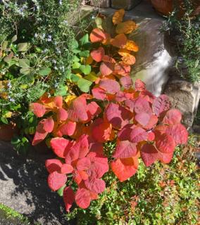 秋のいろ_b0325640_21104281.jpg