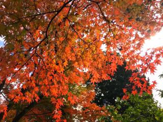 秋のいろ_b0325640_21115429.jpg