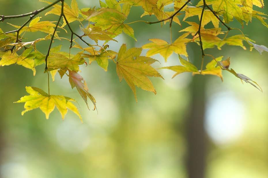 秋色探し ~ハチ・ハチ北高原⑤~_c0067040_20501651.jpg