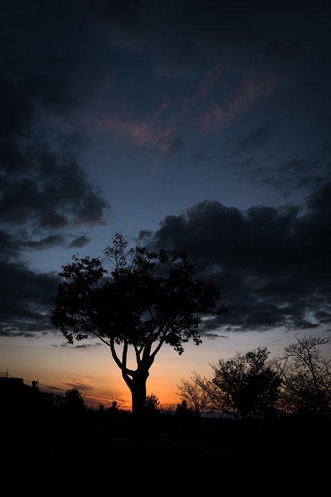 晩秋から初冬に変わる黄昏_d0353489_22491246.jpg