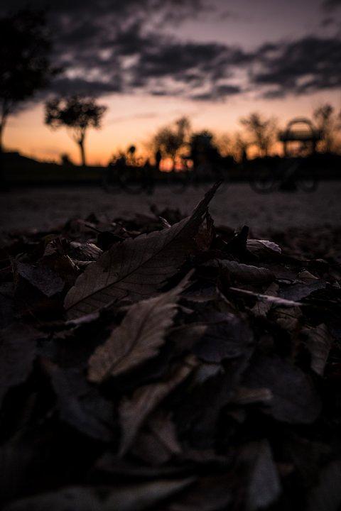 晩秋から初冬に変わる黄昏_d0353489_2249165.jpg