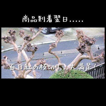 f0159858_10241498.jpg