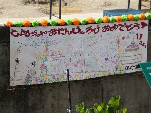 媛ちゃん 11歳のお誕生会_e0272869_22340592.jpg