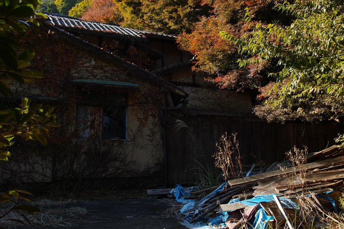 紅葉  2017   金蔵寺_f0021869_13434787.jpg