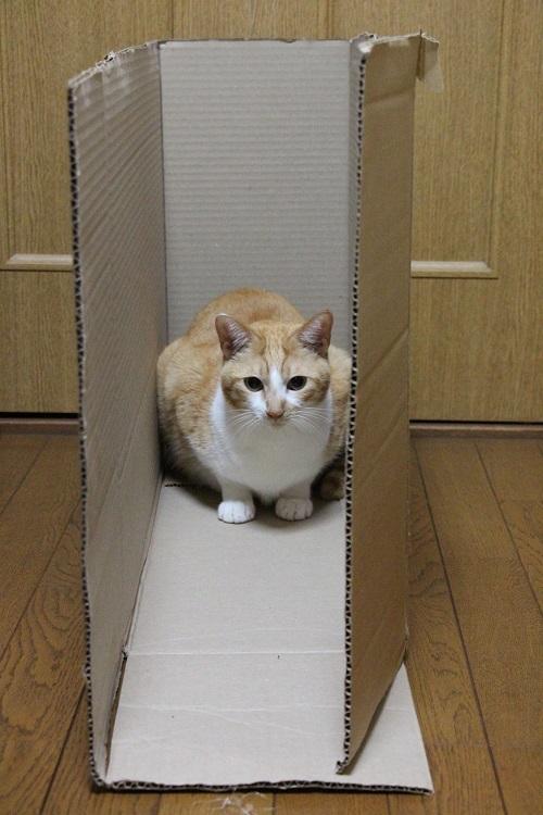 猫の好きなもの_a0333195_21363988.jpg
