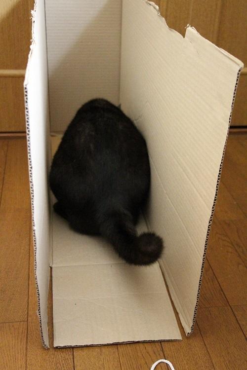 猫の好きなもの_a0333195_21423952.jpg