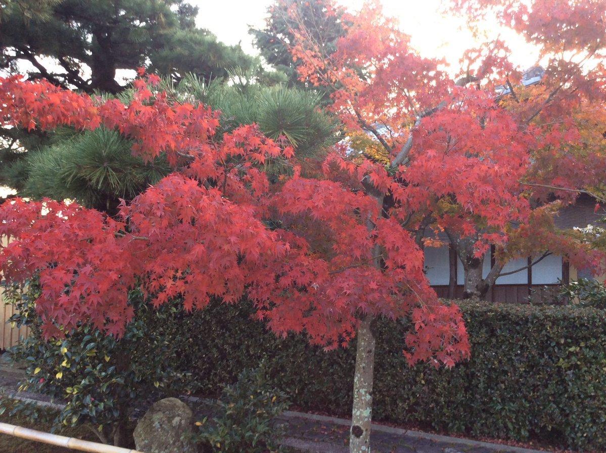 天使さんと秋の旅_c0203401_14312525.jpg