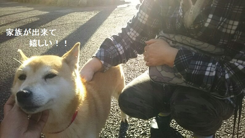 柴犬ちゃんのご縁が結ばれました!_f0242002_23324095.jpg