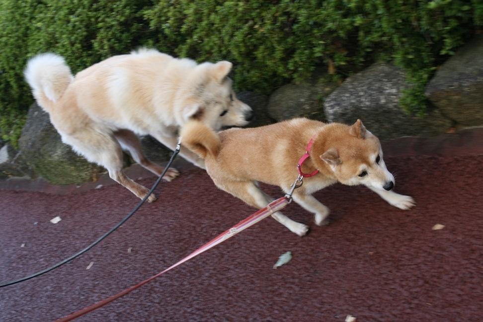 柴犬ちゃんのご縁が結ばれました!_f0242002_23374450.jpg