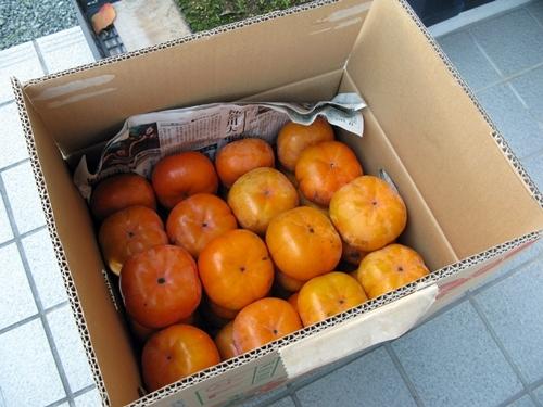 旬の果物_f0129726_21485776.jpg