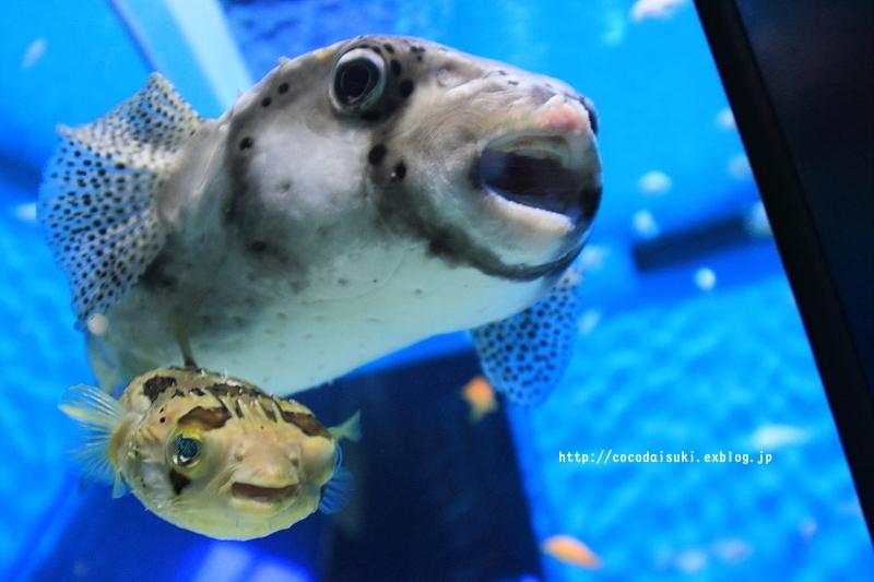 アクアワールド・大洗水族館♪_d0367763_22294278.jpg